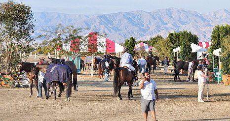 For Equestrians: How Trum…