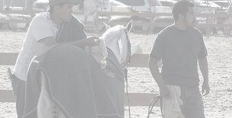 Equestrian industry feeli…
